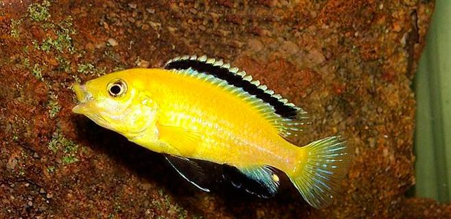 La memoria de los peces puede durar hasta 12 días