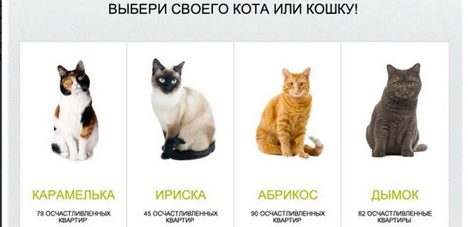 Un banco ruso ofrece gatos por hipotécas