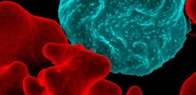 Descubierto el mecanismo de infección de la malaria