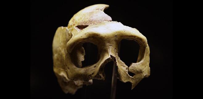 Los neandertales tardaron 40.000 años en desaparecer