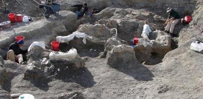 Descubierto el mayor dinosaurio conocido