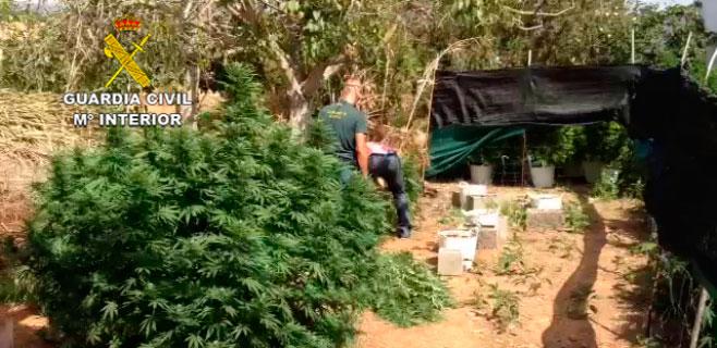 2 detenidos por cultivar y preparar marihuana en una finca de Consell