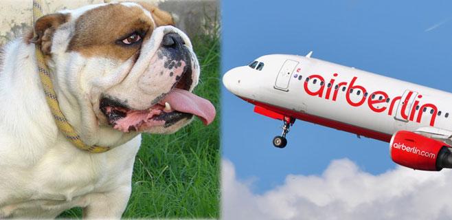 Denuncia contra Air Berlin por la muerte de un perro durante un Palma-Sevilla