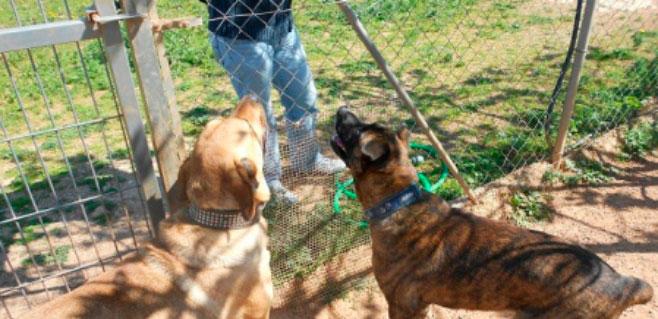 El centro canino Internacional coloca a todos sus perros