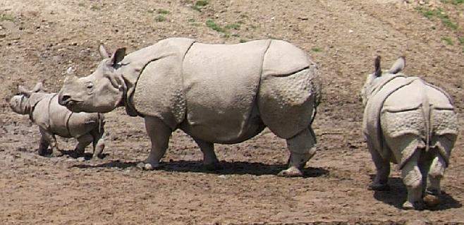 Los vertebrados terrestres se han reducido a la mitad