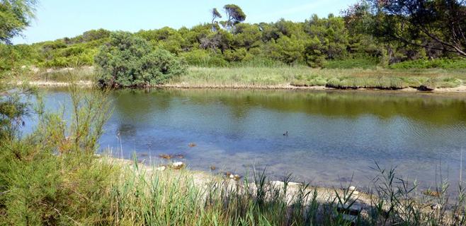 Las aguas de Can Picafort están en peligro por un proyecto de depuradora