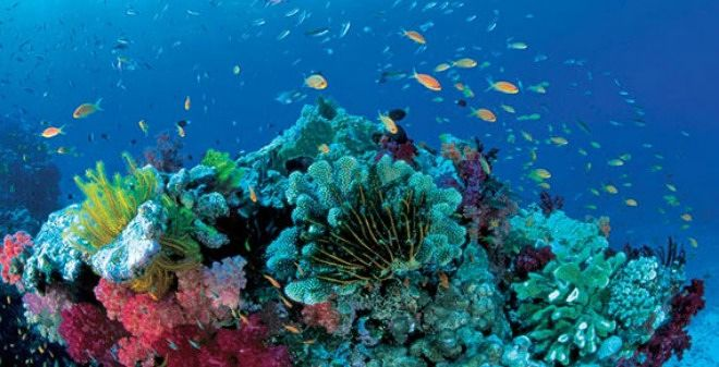 La orina del plancton o el krill altera la química del océano