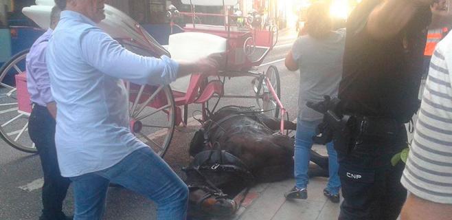 Un caballo cae desplomado en pleno centro cuando tiraba de una galera