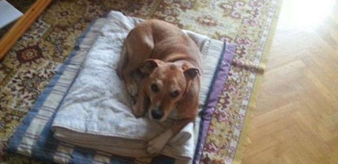 Polémica por el sacrificio del perro de la enferma de ébola
