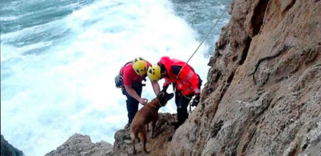 El alcalde de Banyalbufar salva a un perro de morir ahogado