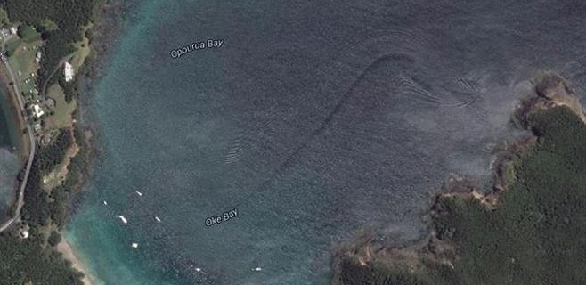 Aparece un misterioso monstruo marino en Nueva Zelanda