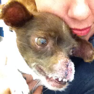 """""""Mi sueño es crear un centro de rescate y rehabilitación para perros con problemas"""""""