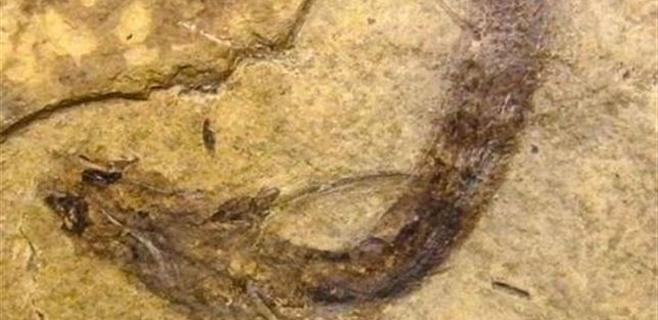 Los reptiles veían en color hace 300 millones de años