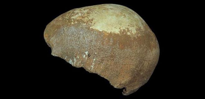 Un cráneo prueba que neandertales y humanos convivieron