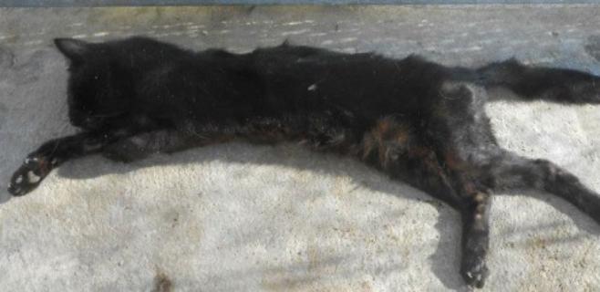 Un vídeo muestra gatos mal cuidados en Natura Parc