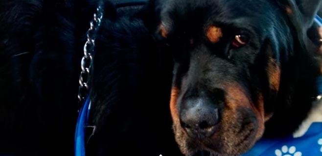 El vídeo de un perro llorando a su hermano conmueve en la Red