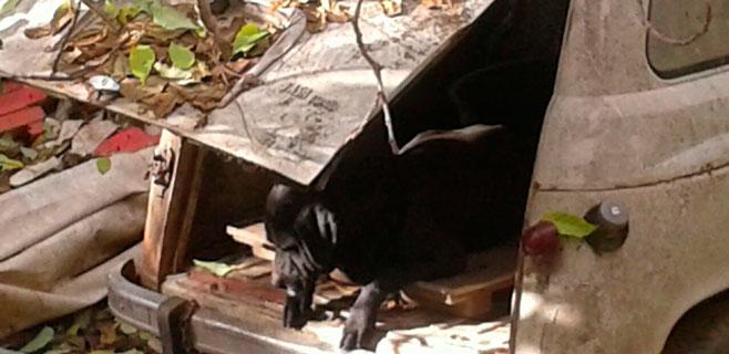 ASSAIB denuncia el mal estado de un grupo de perros en un solar de Consell