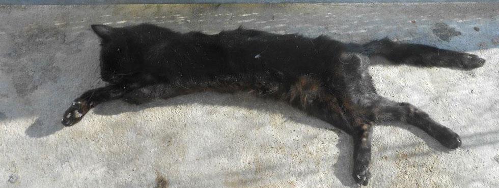 Un vídeo grabado por voluntarios muestra el grave estado de unos animales en Natura Park