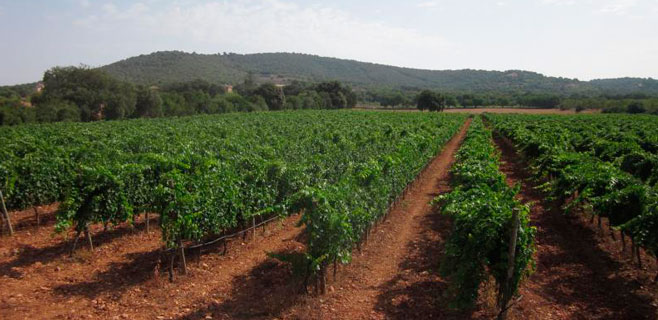 La producción de vino en Balears cae un 5,8% en 2014