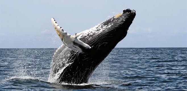 Los animales tienden a evolucionar creciendo en tamaño
