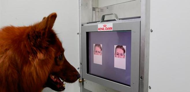 Los perros distinguen la sonrisa del enfado en el rostro humano