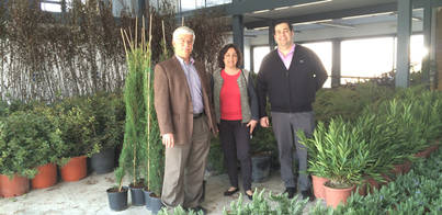 Marratxí dispondrá de nuevo arbolado en sus zonas verdes