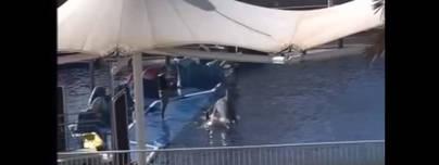 Cuelgan en redes sociales otro vídeo de maltrato a delfines en Marineland Mallorca
