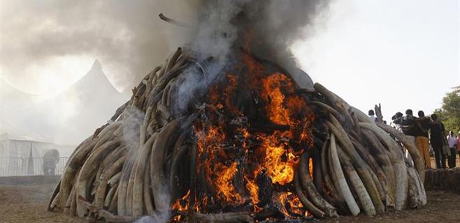 Quema de 15 toneladas de marfil contra la caza furtiva