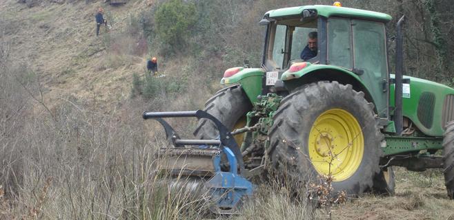 Endesa invirtió 707.000€ en limpiar zonas boscosas
