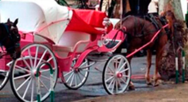 Otro caballo de las galeras de Palma se desploma agotado en pleno centro