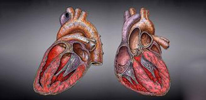 La edad de la madre se relaciona con problemas cardíacos