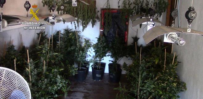 Desarticulada una banda dedicada al cultivo de marihuana en Mallorca