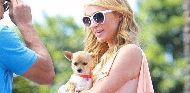 Paris Hilton, destrozada por la muerte de su perro