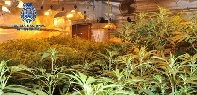 La Policía desmantela una plantación de marihuana en Lloret de Vistalegre