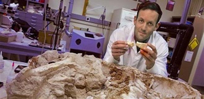 Un estudio apunta a que los dinosaurios eran de sangre caliente