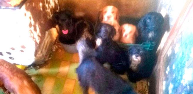 Rescatados 52 perros de una casa de Camp Redó