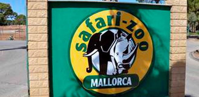El GOB reclama el cierre del Zoo de Sa Coma tras la fuga de dos chimpancés
