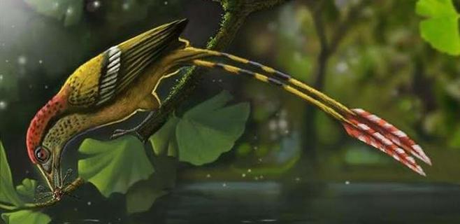Un fósil de un ave con dientes revela el origen de las plumas