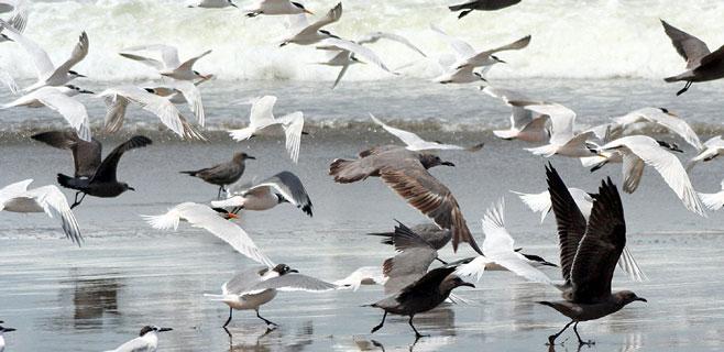 En 60 años han desaparecido 230 millones de aves