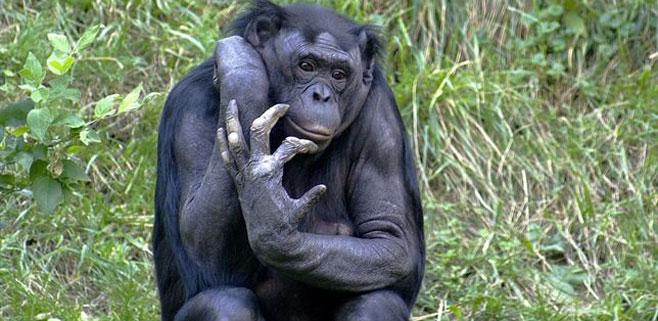 La mano humana es más primitiva que la del chimpancé