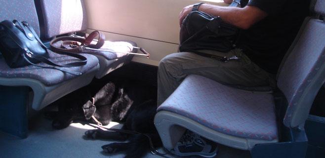 Una mallorquina inicia una campaña para que dejen subir perros al tren