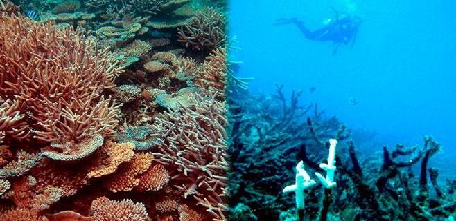 Los arrecifes de coral afrontan su próxima desaparición