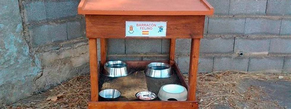 El primer barracón felino de España está en Palma