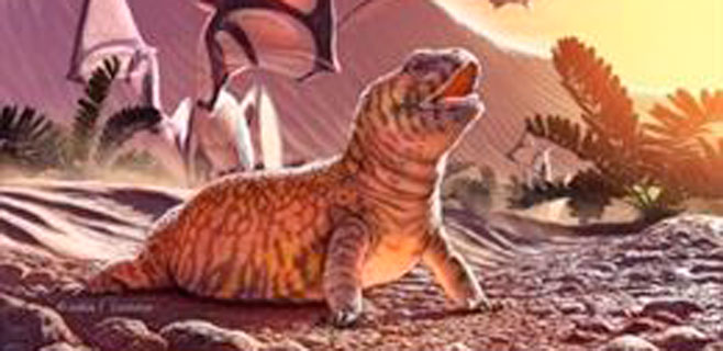 Hallado un eslabón perdido en la evolución del lagarto