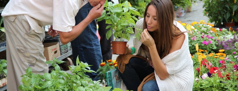 Hierbas aromáticas: el sabor añadido