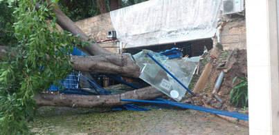 La tormenta derriba un árbol sobre una oficina y varios coches en Palma