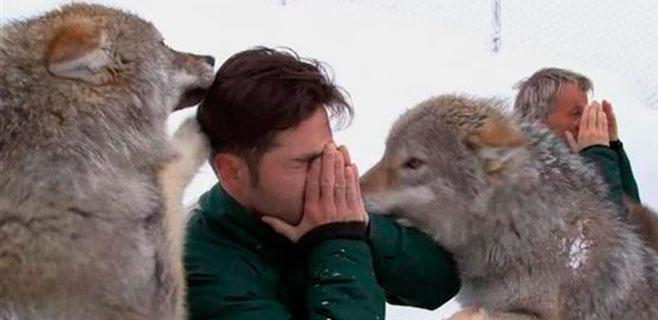 Bustamante 'bailó' con lobos