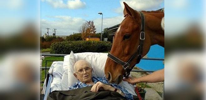 El último adiós de un caballo a su amo enfermo