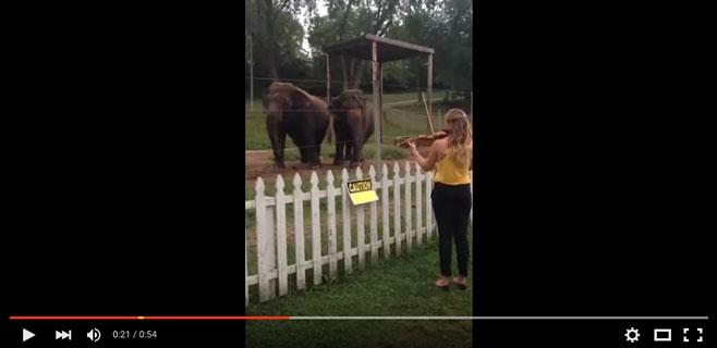 Dos elefantes bailan entregados al son del violín
