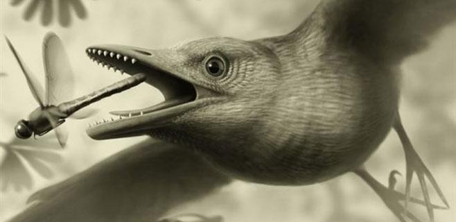 Un fósil demuestra que las aves volaron sobre los dinosaurios